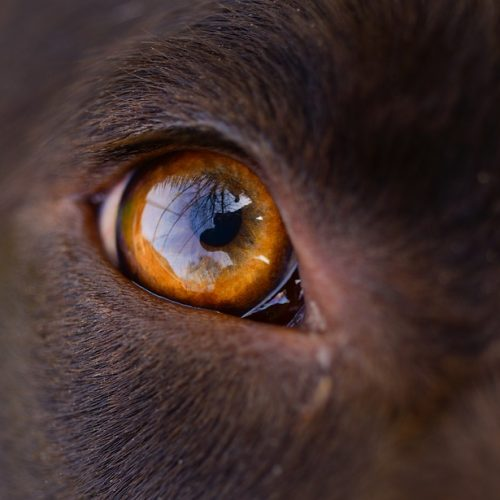 Insanely Cute Endangered Irish Animals