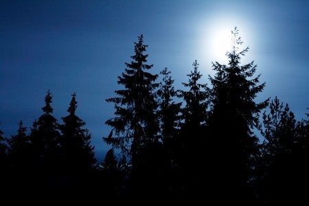 This was a dark November night in a Swedish fir tree wood. This kind of wood is pretty dense and consists mostly of fir trees. Pretty scary at night. Than the moon rose up over tree tops overhemlingly bright and magnificent, like a crown, ruling the night world.