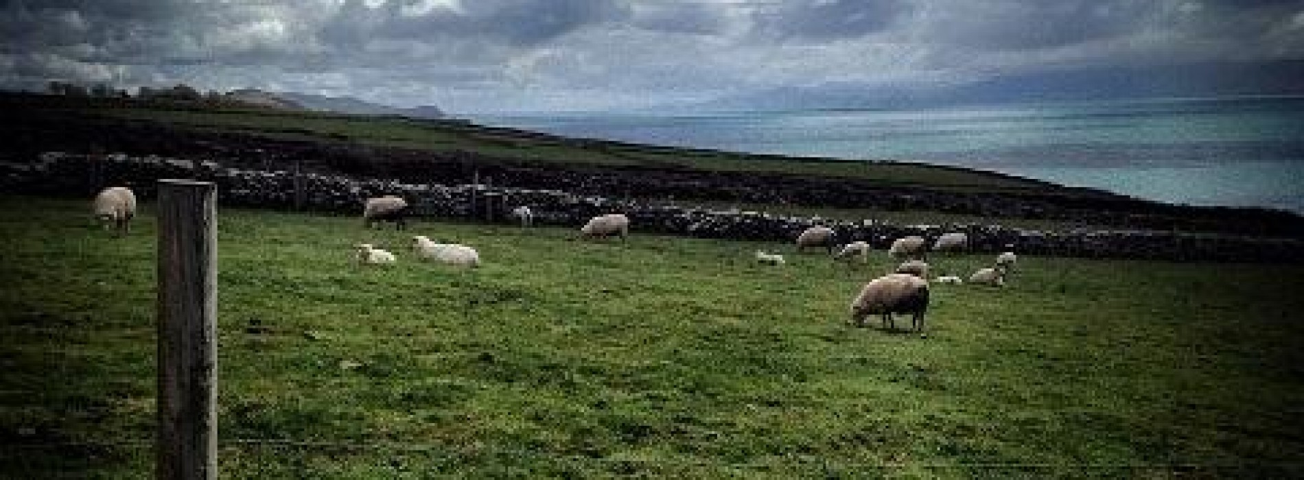 WANT A PIECE OF THE MOTHERLAND? YOU CAN NOW BUY ONE SQUARE FOOT OF IRISH LAND