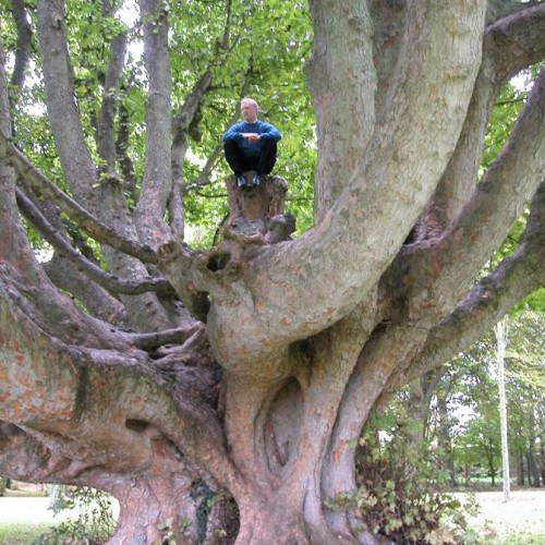 IRELAND'S SACRED TREES