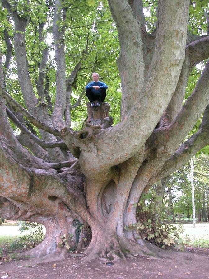 sacred-trees