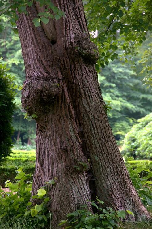 treesoulmate