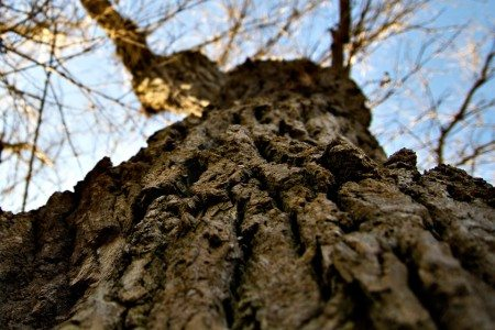 oak-tree-163909_960_720