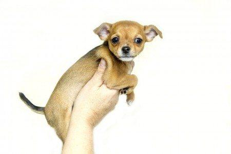 puppy-1047452_960_720