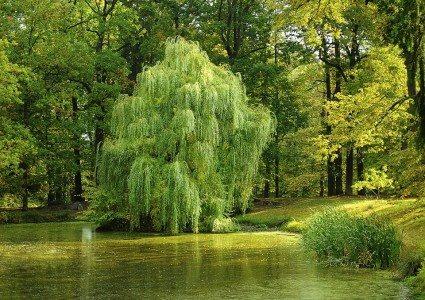 tree-984846_960_720