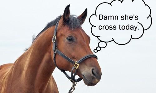 Horses can Read Human Emotions