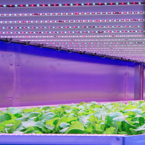Hotwiring Plants in Indoor Farms – This is Our Food Future