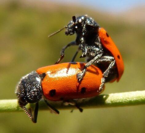 ladybug-911679_960_720