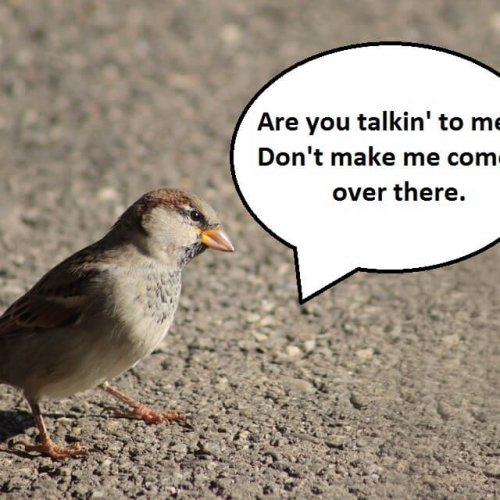 City Birds Are Angrier Than Rural Birds