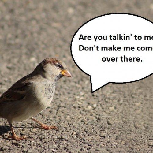 City Birds Are Angrier Than Rural Birds
