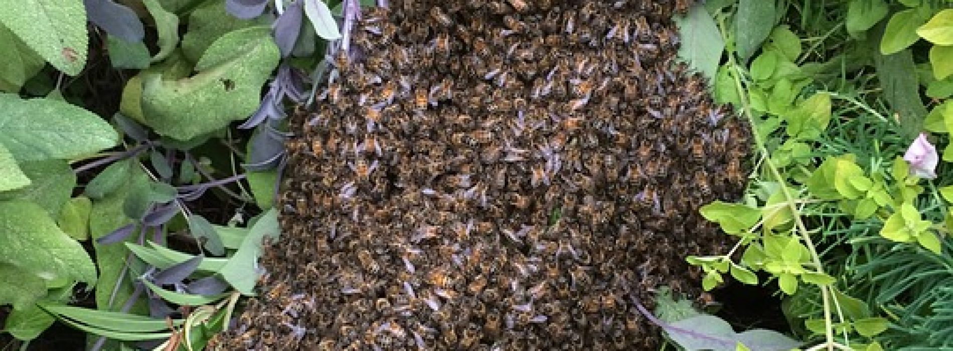 Is There a Wild Beehive Near You? Then Scientists Need to Know