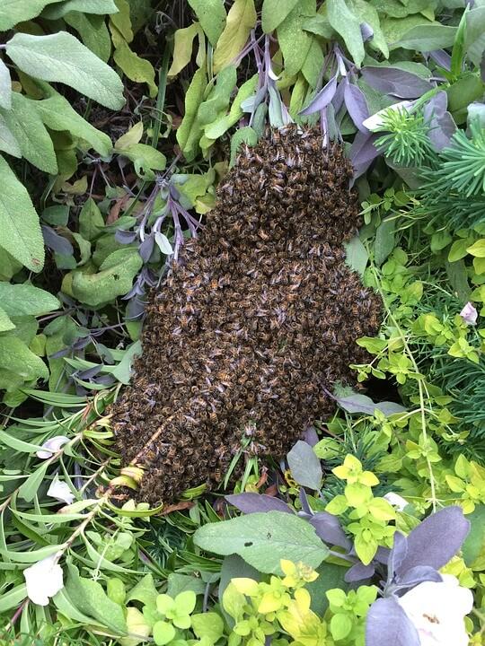 honeybee-1181558_960_720