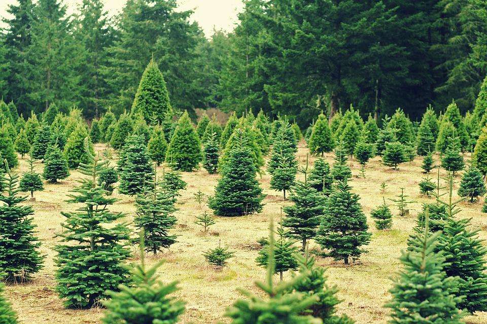 christmas-235357_960_720
