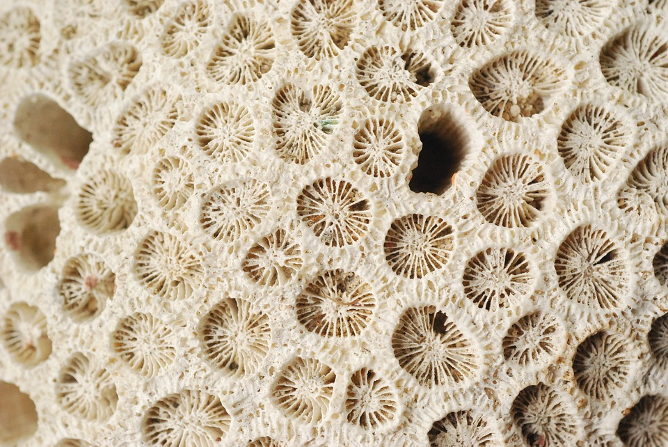 corals-1696275_960_720