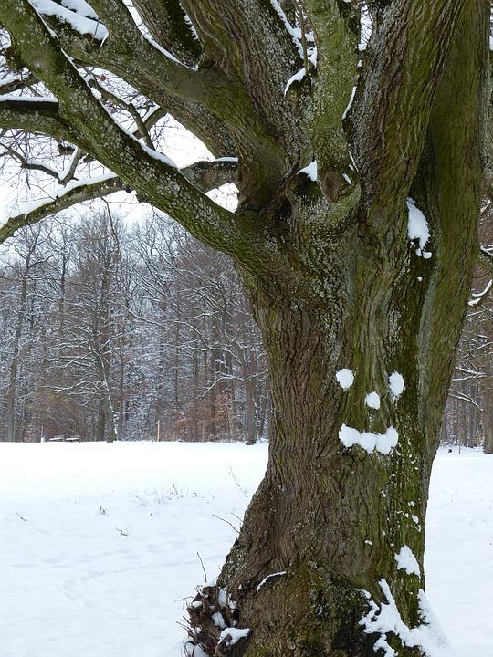 tree-91929_960_720