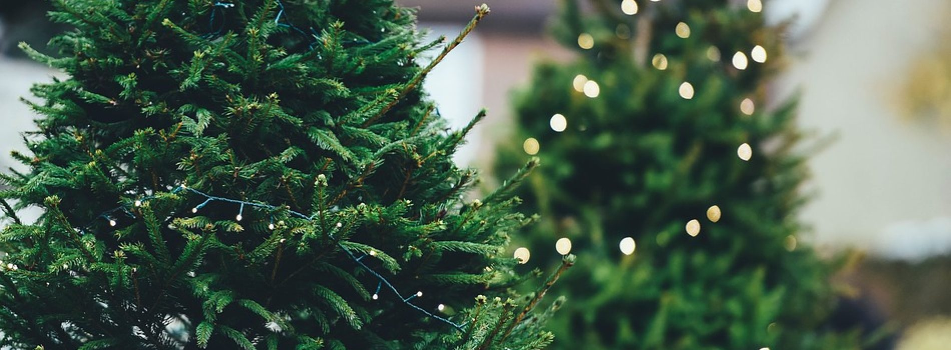 Americans are Starting to Prefer European-Style Christmas Trees
