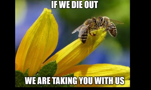 Save the Bees? There's an App for That