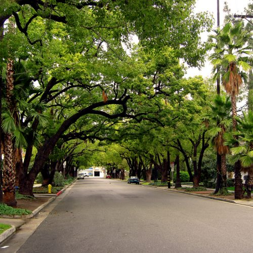 Trees Make Your Street Warmer in the Winter