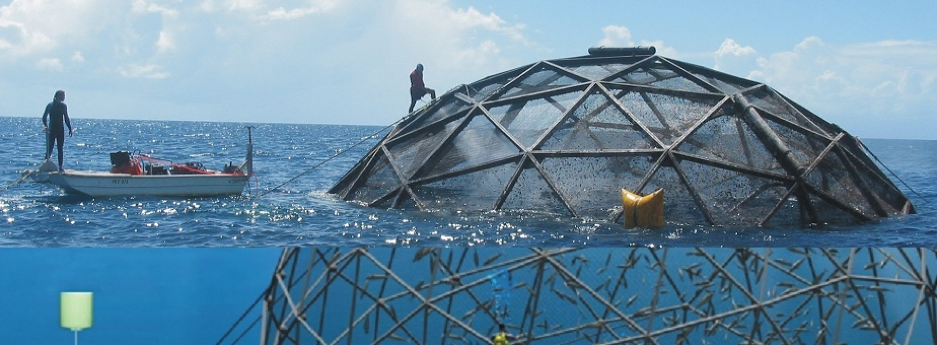 How to Farm Plentiful Fish While Taking Care of the Ocean