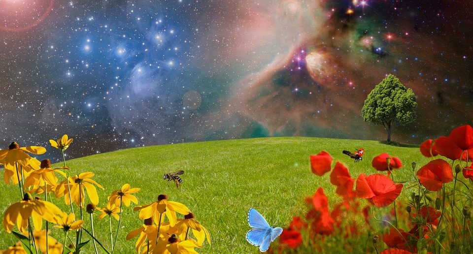 constellations in the sky with flowers in foreground