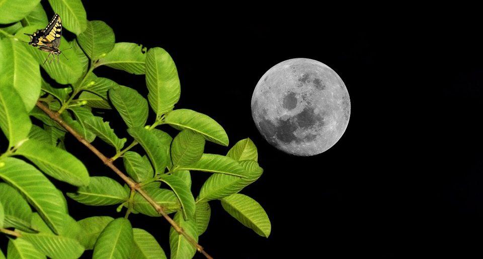 full moon in night sky