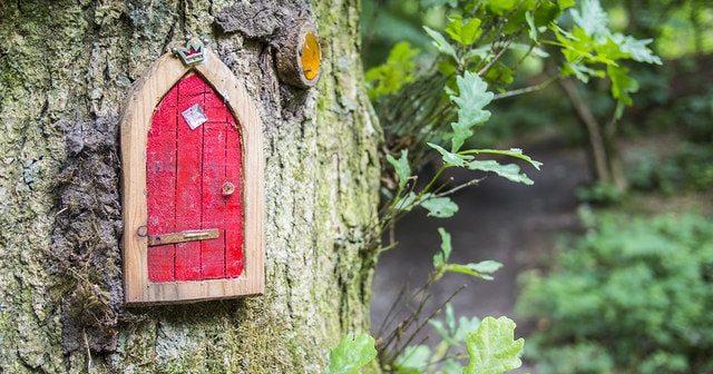 fairy door in trunk of tree