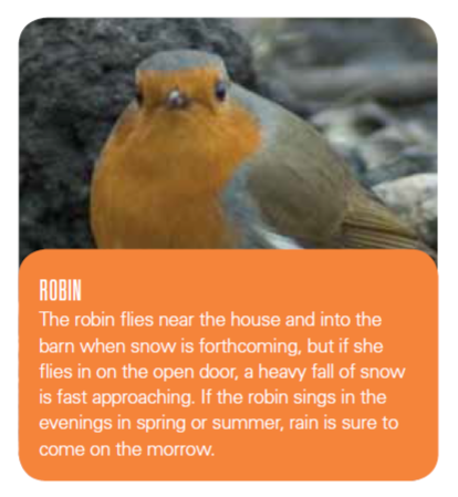 image of a robin with text about signs of bad weather