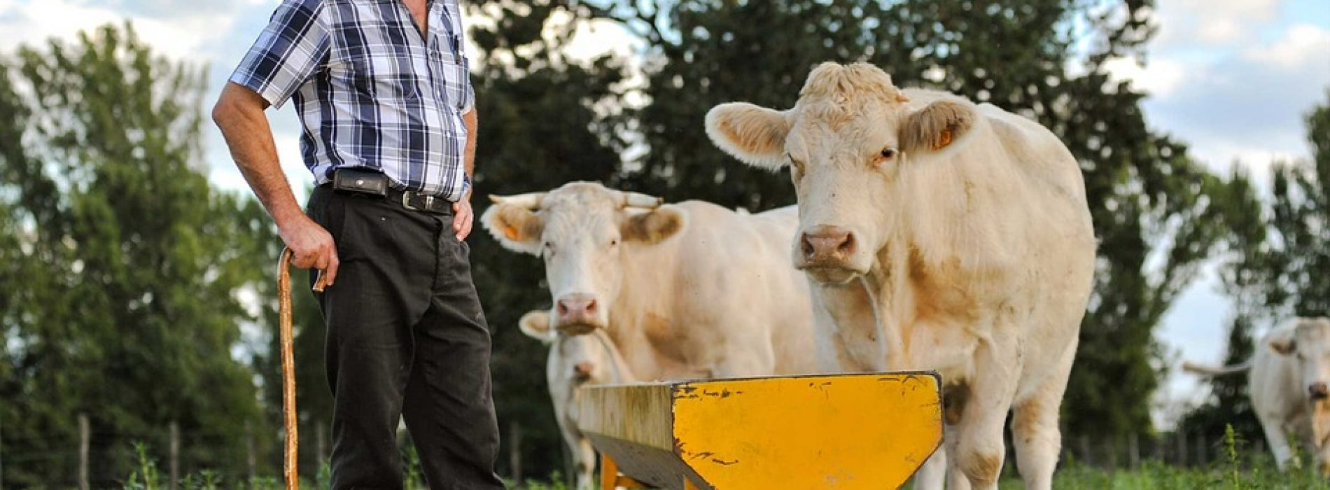 80% of Irish Farmers Have Risky Heart Health