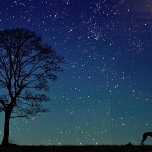 Professor Proves that Planets Influence Animal Behaviour