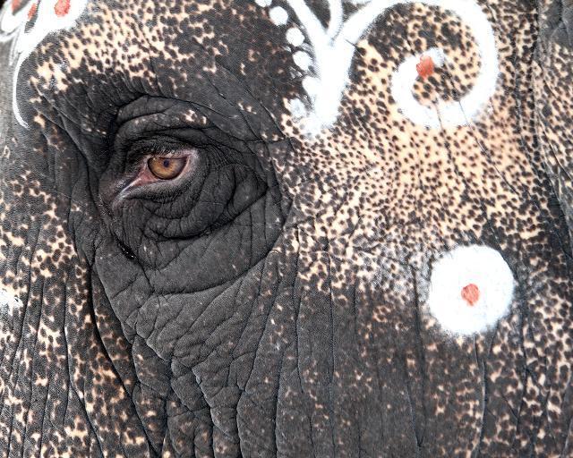 elephantdeath