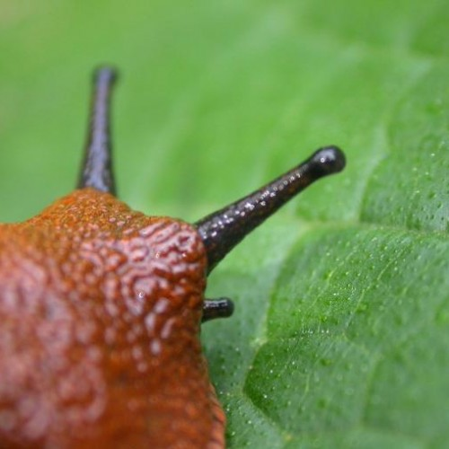 How to Win the Slug War in Your Garden