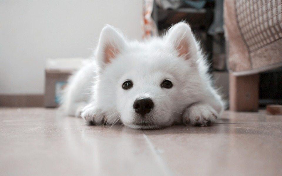 dog-617041_960_720