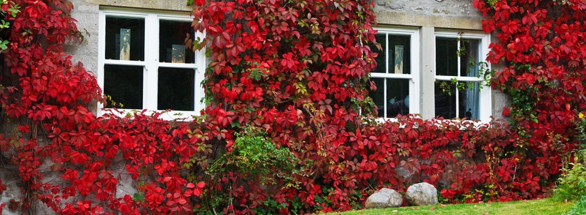 Tips For Autumn Planting