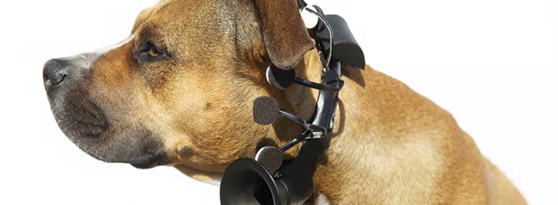 What is Your Dog Trying to Tell You? Within a Few Years, You Will Know.