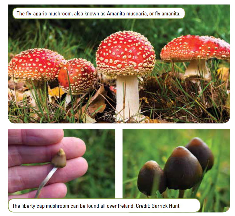 The Mysterious And Lost Magic Mushroom Rituals Of The