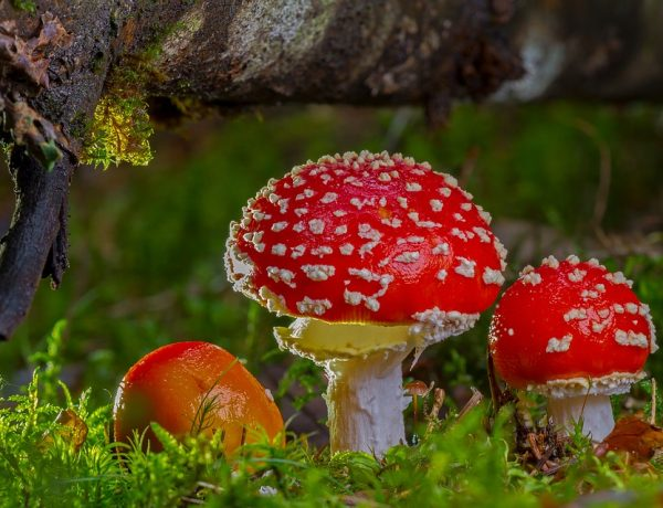 The Mysterious And Lost Magic Mushroom Rituals Of The Ancient Celts