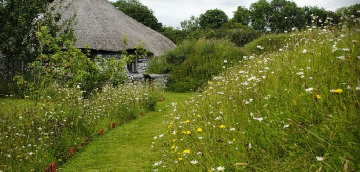 old Irish cottage and garden full of flowers