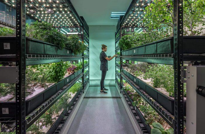 plants growing indoors