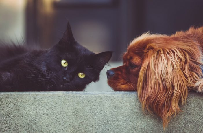 dog and cat lying down together