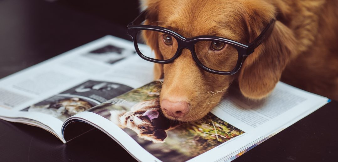 dog intelligence: a dog wearing glasses lying on a newspaper