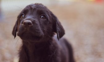 black puppy looking up