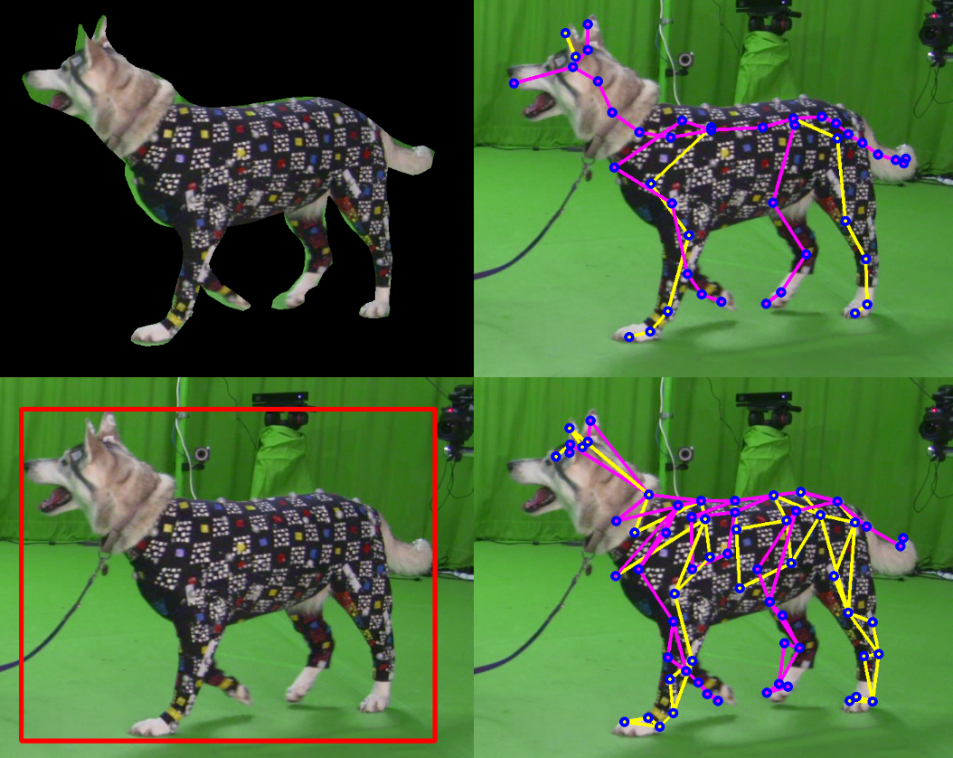 Dog owners can make a 3D digital representation of their pet!