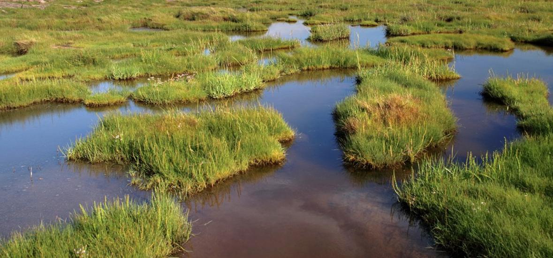 Seawater Farming